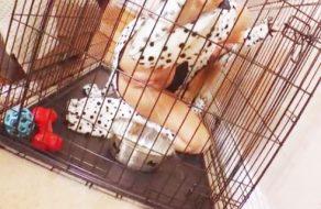 imagen Perra cachonda se mea en la jaula y la castigan